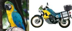 gionata nencini, partireper.it, un viaggio nel mondo in moto, honda transalp xl600v, progetto motato