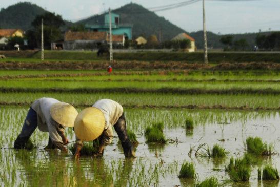 Vietnam: Una questione di feeling